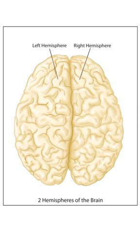 the brain is divided into two hemispheres According to aboutcom biology, the corpus callosum connects the brain's two hemispheres innerbodycom reports that the corpus callosum is a broad arch that is divided into a curved front end called the genu and a backward-pointing portion called the rostrum, which tapers downward to connect with .